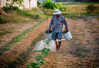 Organic Farming Business