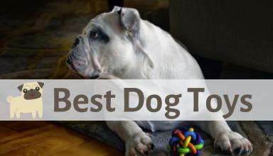Best Dog Toys