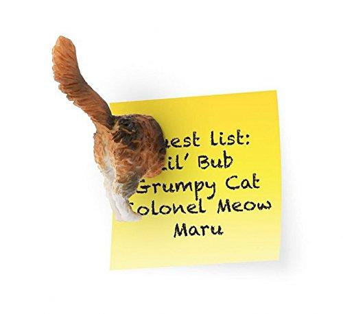Cat Butt Kitchen Magnet Set