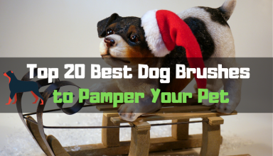 Top 20 Best Dog Brushes to Pamper Your Pet