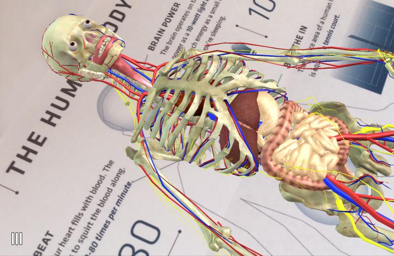 Anatomy4D