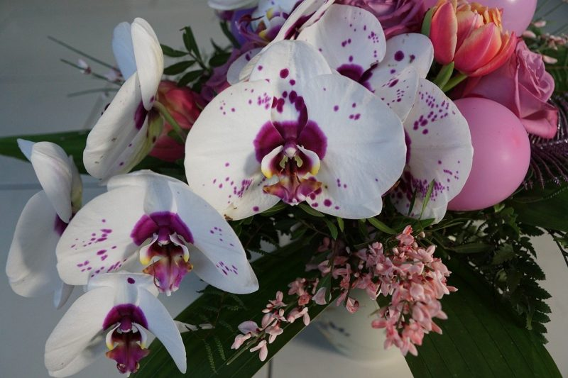 Orchid Perfumes