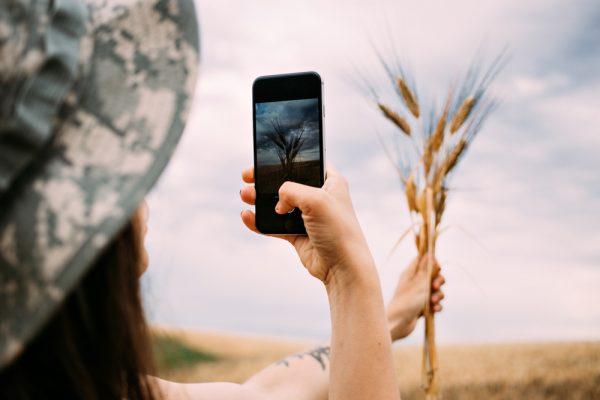 Female mobile photographer shoots wheat