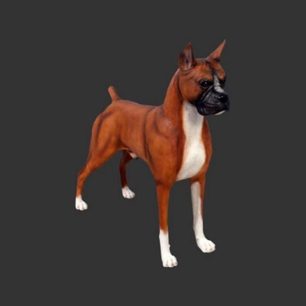 Fiberglass robust Life-size Boxer dog statue