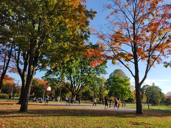 Withrow Park: Park In Toronto